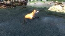 Компаньоны лисы