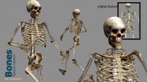Бестиарий Коннари - Скелеты