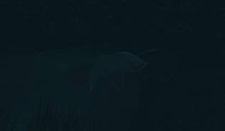 Слепая рыба-убийца