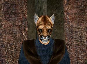 Полное прохождение Morrowind: Гильдия магов