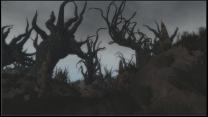Новые деревья в Эшленде