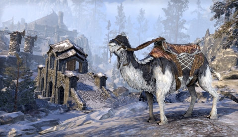 Верблюд ледяной погибели
